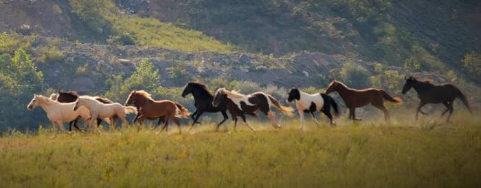 horses-free-roaming