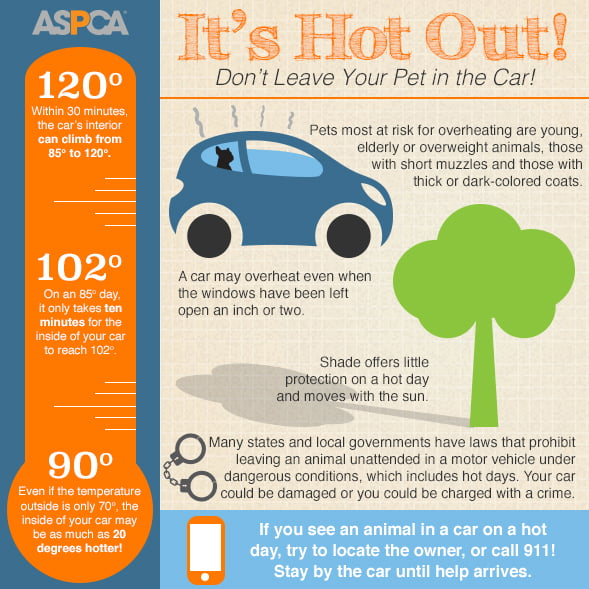 hot cars infographic