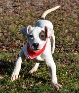 Teenage Puppy Social, age 4-6 months. Instructor: Sue. Length: 3 weeks. Cost: $75.00