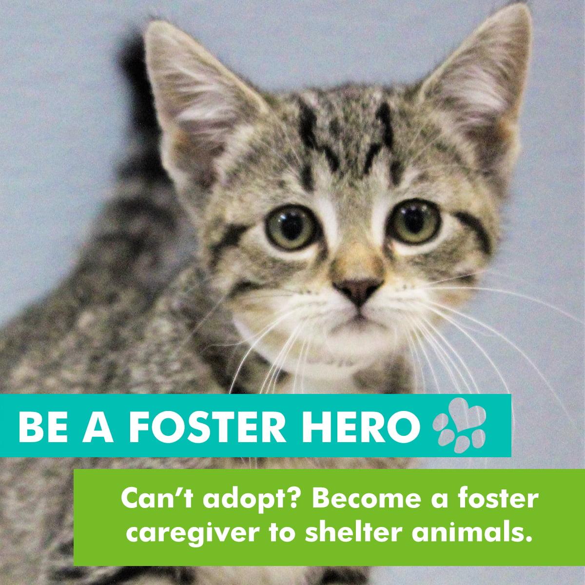 foster hero
