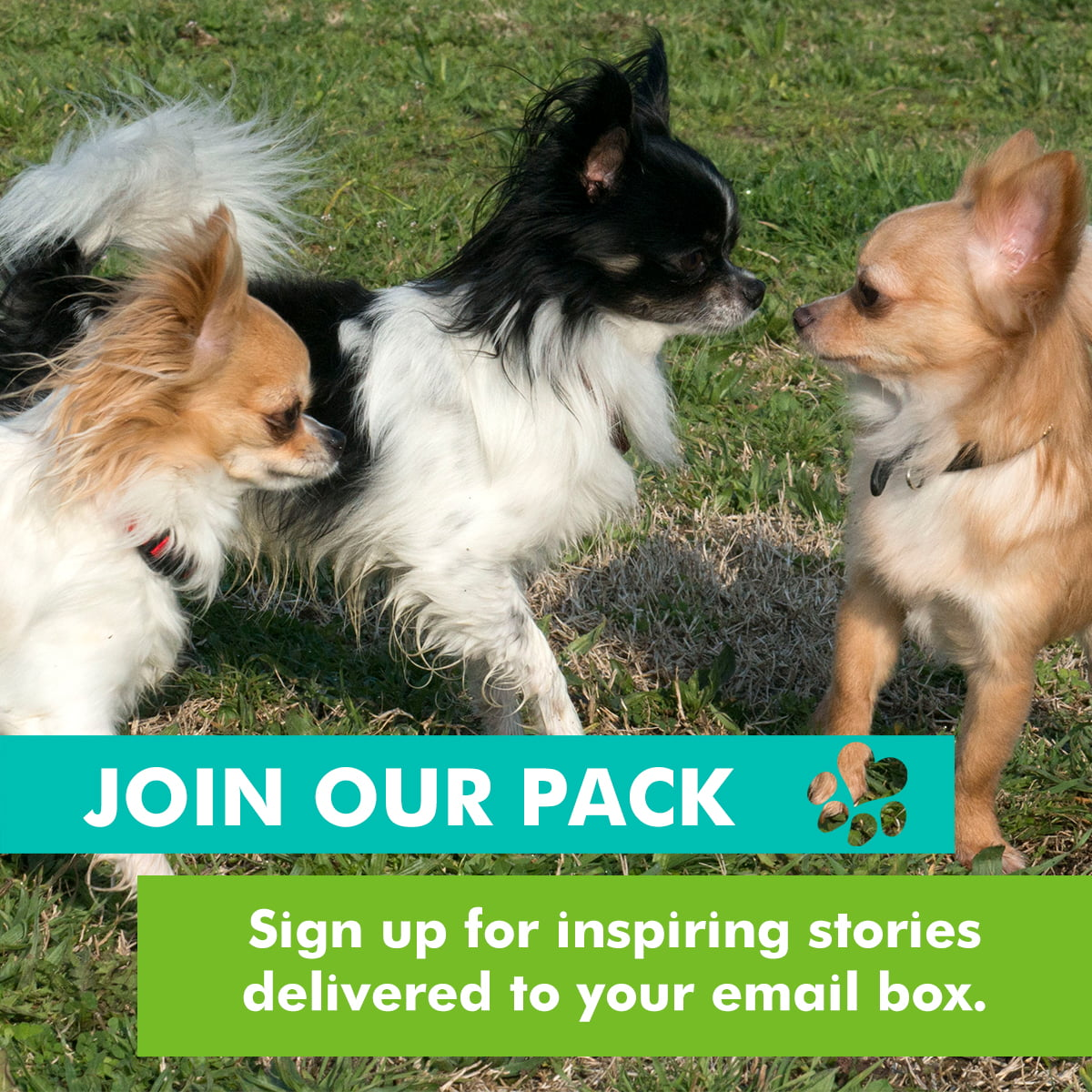 join our pack